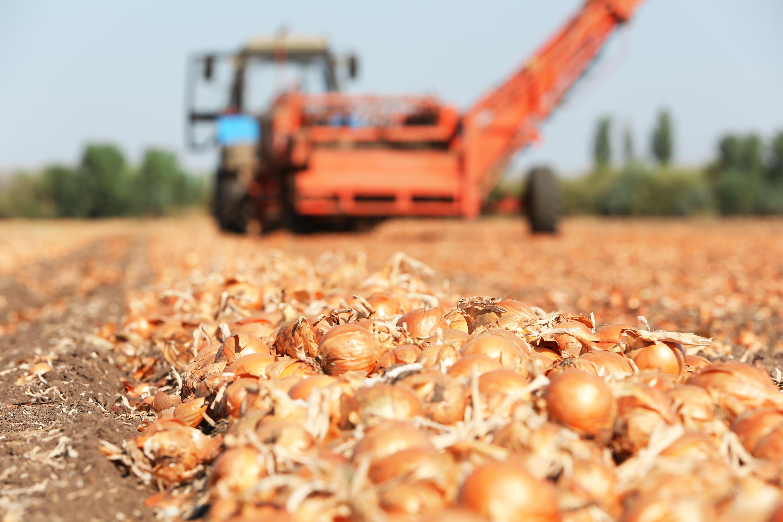 Повышение прибыльности агробизнеса за счет успешной стратегии международного развития